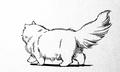 アニスの猫